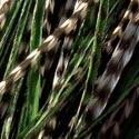 Additional Length Feather-#Green Olive